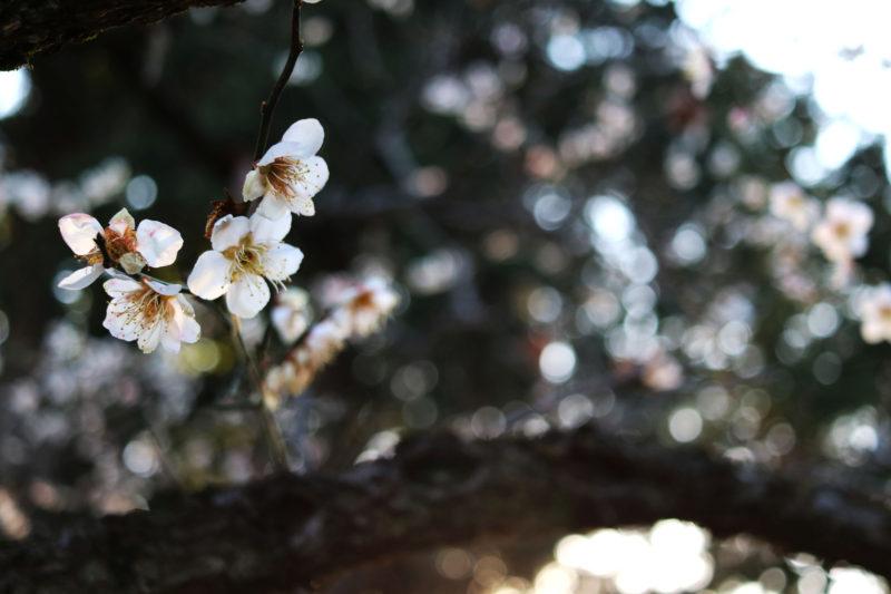 OIMOcafeの春プレート